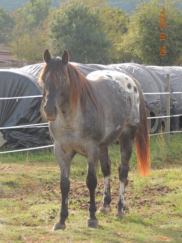 Les chevaux de l'Appaloosa IJ Farm - Page 3 Undy_611
