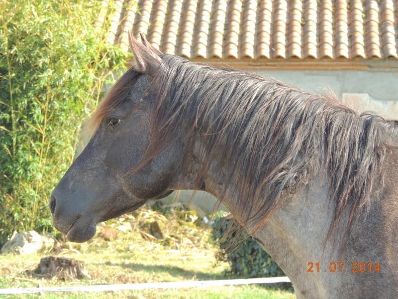 Les chevaux de l'Appaloosa IJ Farm - Page 3 Undy_710