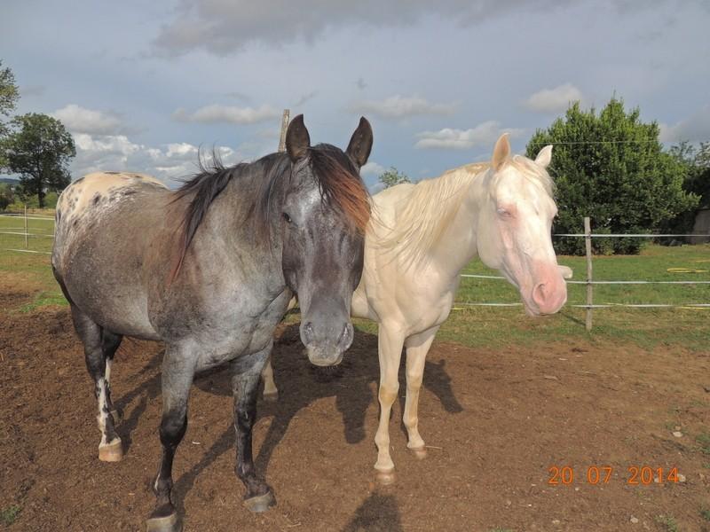 Les chevaux de l'Appaloosa IJ Farm - Page 3 Undy_e11