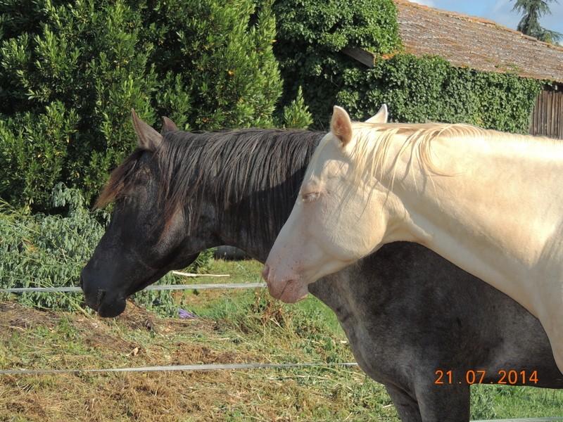 Les chevaux de l'Appaloosa IJ Farm - Page 3 Undy_e13