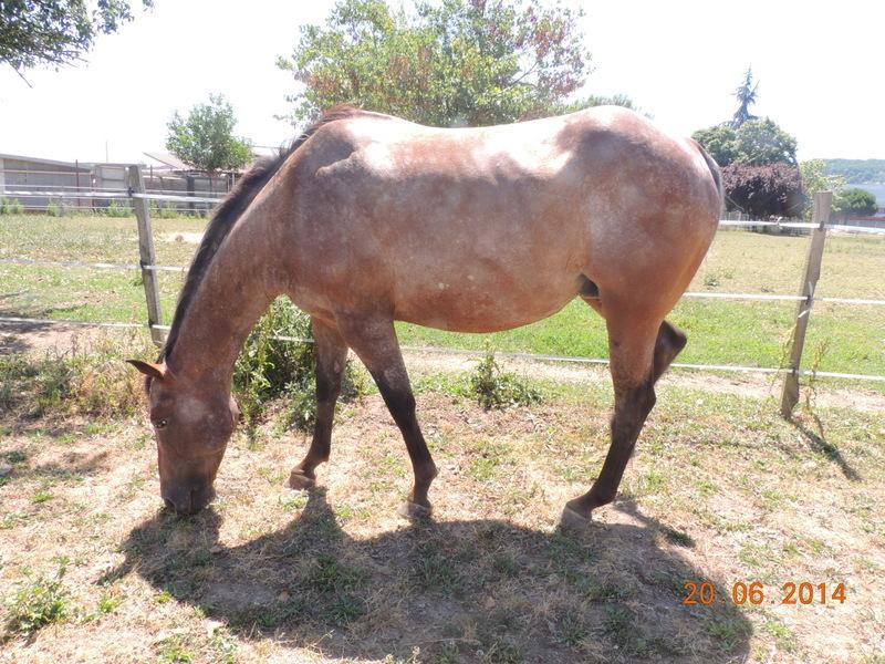 Les chevaux de l'Appaloosa IJ Farm - Page 2 Uppy10