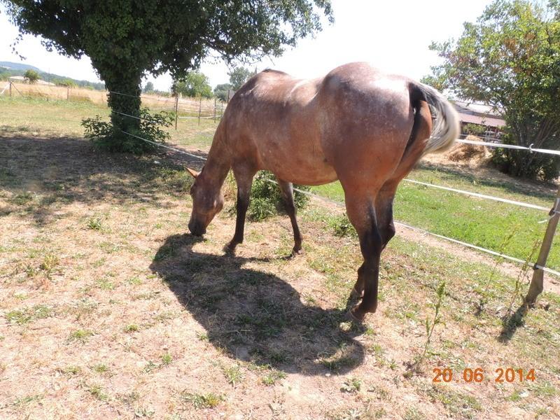 Les chevaux de l'Appaloosa IJ Farm - Page 2 Uppy_210