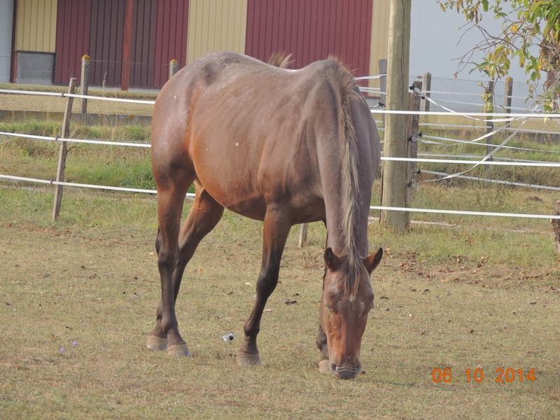 Les chevaux de l'Appaloosa IJ Farm - Page 3 Uppy_212