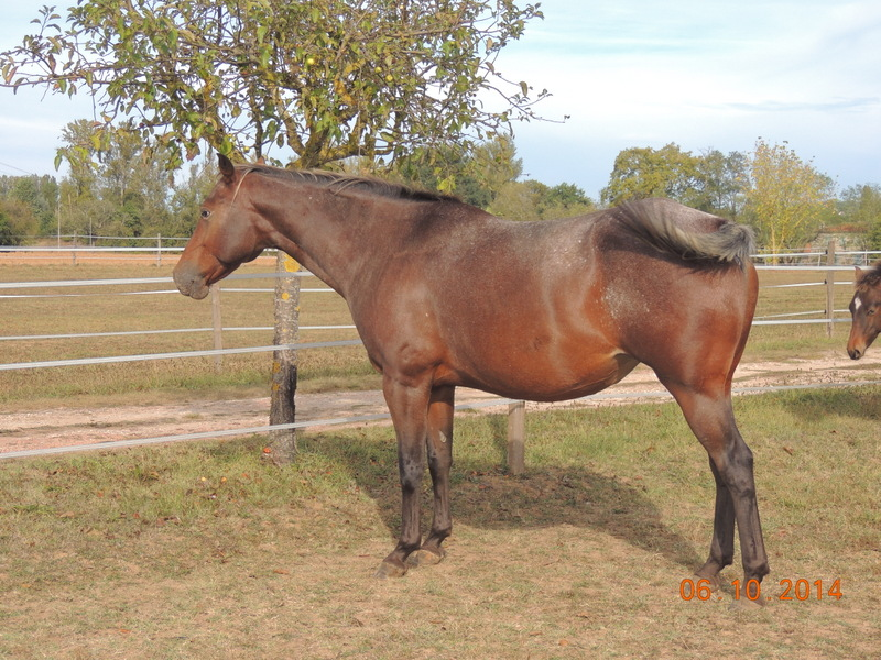 Les chevaux de l'Appaloosa IJ Farm - Page 3 Uppy_511