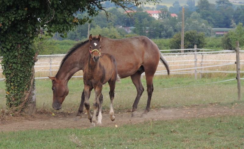 Mes chevaux, un mélange d'un peu tout le monde! - Page 10 Uppy_e10