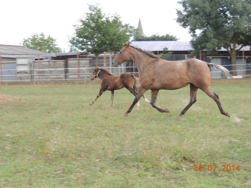 Mes chevaux, un mélange d'un peu tout le monde! - Page 10 Uppy_e11