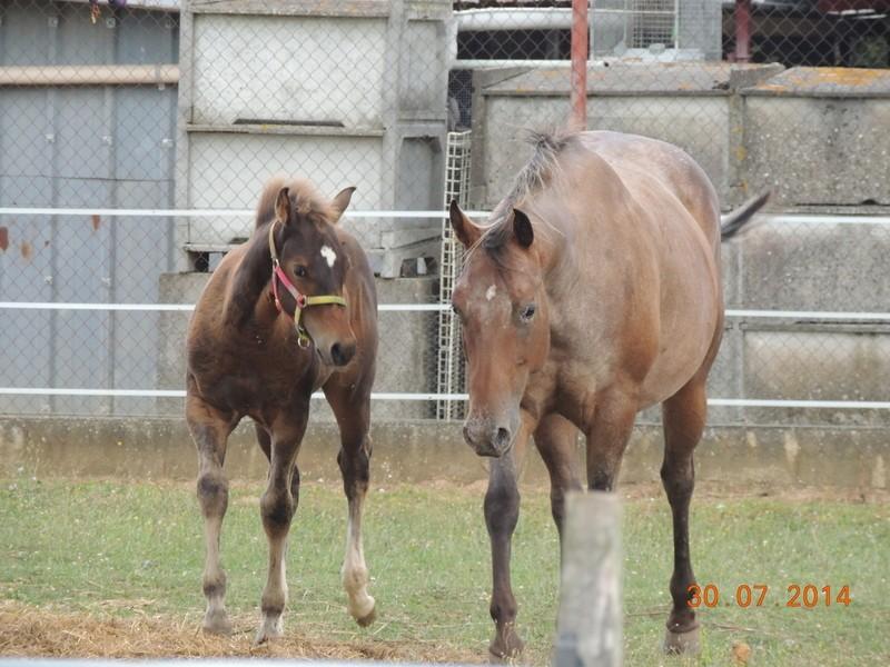 Mes chevaux, un mélange d'un peu tout le monde! - Page 10 Uppy_e12
