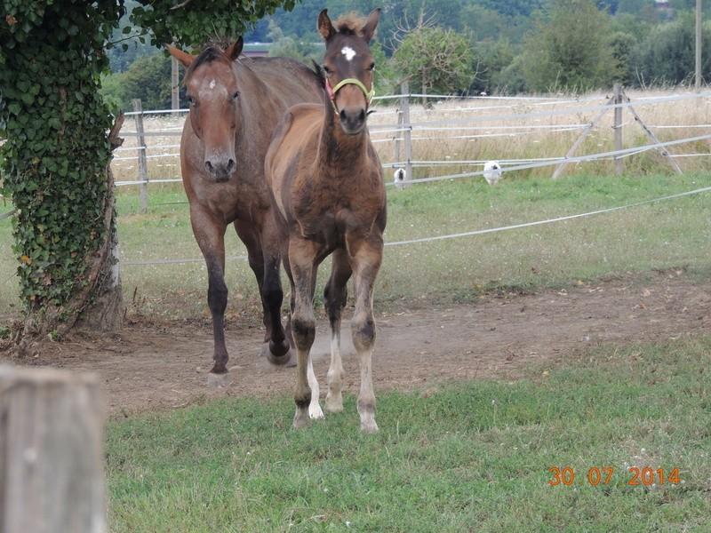 Mes chevaux, un mélange d'un peu tout le monde! - Page 10 Uppy_e13