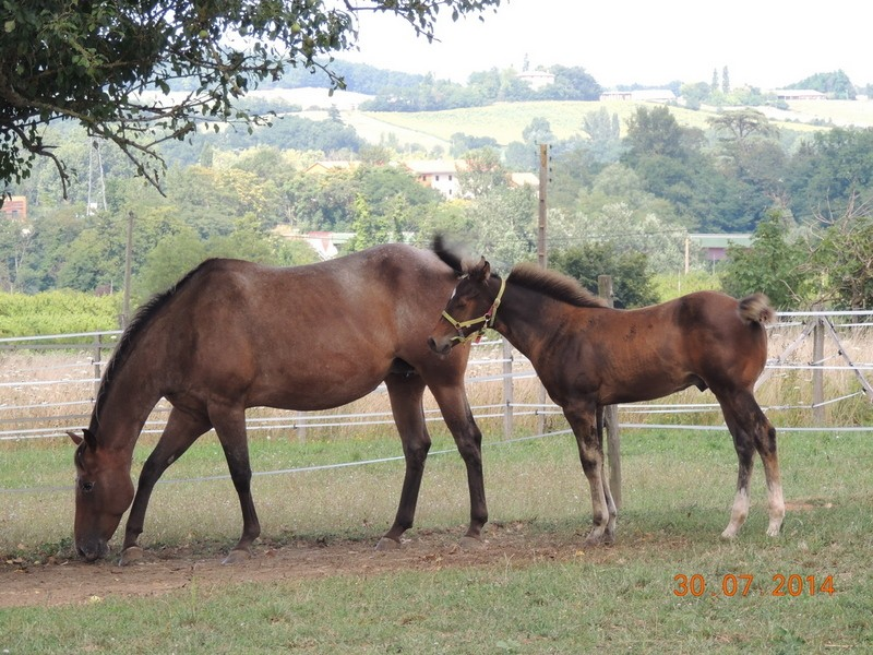 Mes chevaux, un mélange d'un peu tout le monde! - Page 10 Uppy_e14