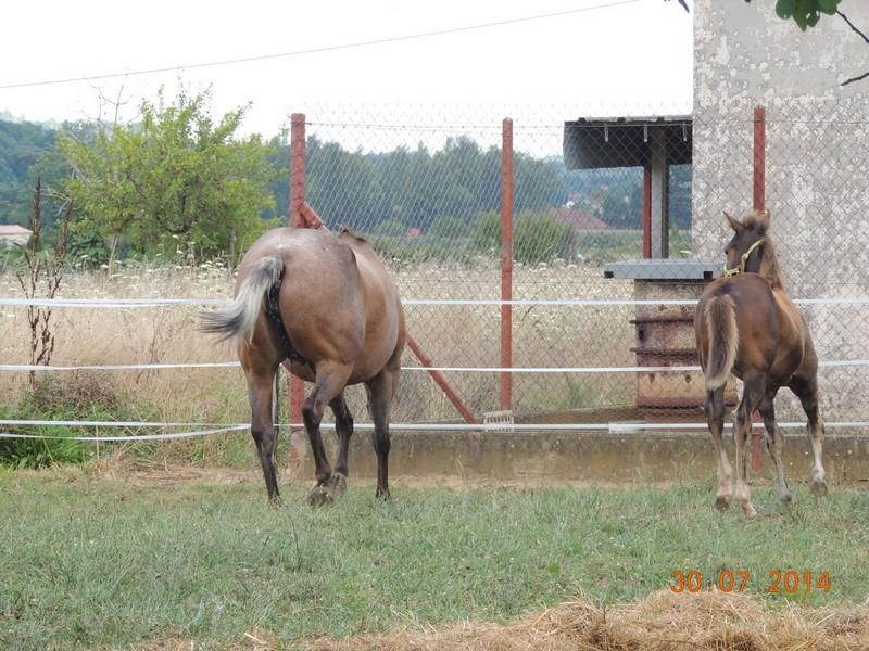 Mes chevaux, un mélange d'un peu tout le monde! - Page 10 Uppy_e15