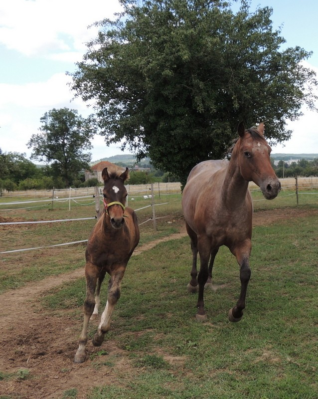 Mes chevaux, un mélange d'un peu tout le monde! - Page 10 Uppy_e16
