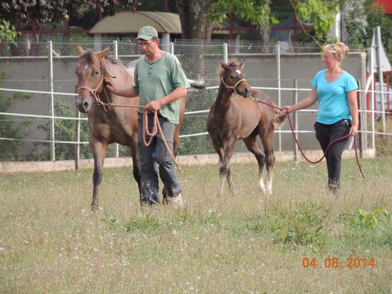 Les poulains né à l'Appaloosa IJ Farm - Page 4 Uppy_e18