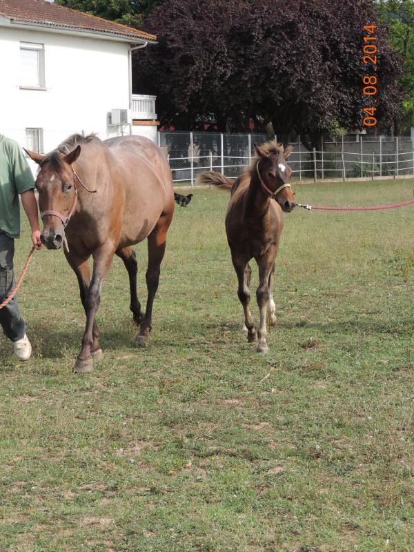 Les poulains né à l'Appaloosa IJ Farm - Page 4 Uppy_e21
