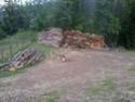 foto dal bosco, i nostri mezzi all'opera - Pagina 3 Foto0112