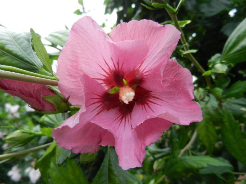 Floraisons du mois d'Août - Page 10 01315