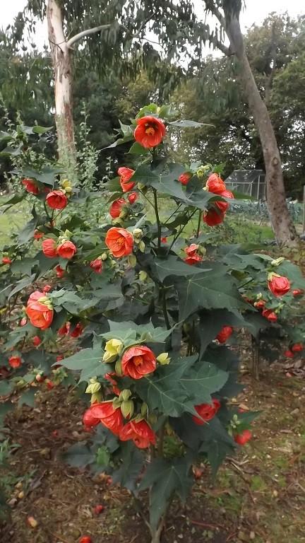 floraisons d'octobre - Page 13 01421