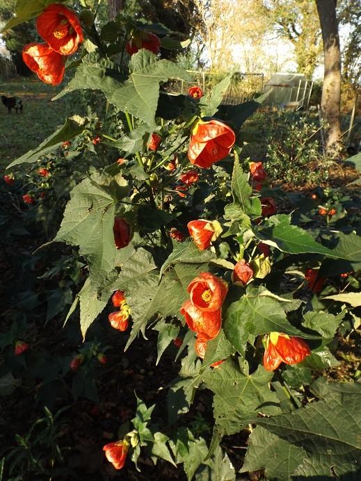 Floraisons de décembre  - Page 7 01422