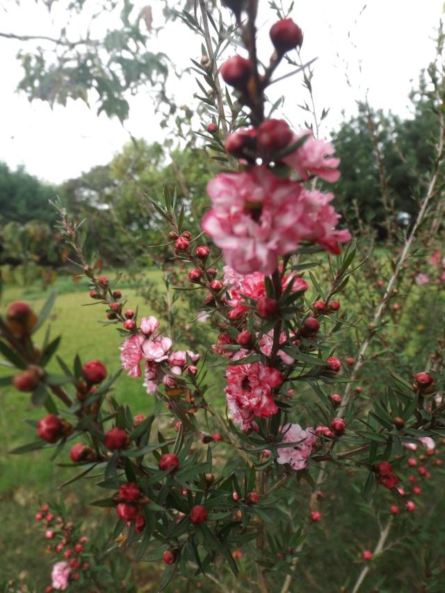 floraisons d'octobre - Page 13 02615