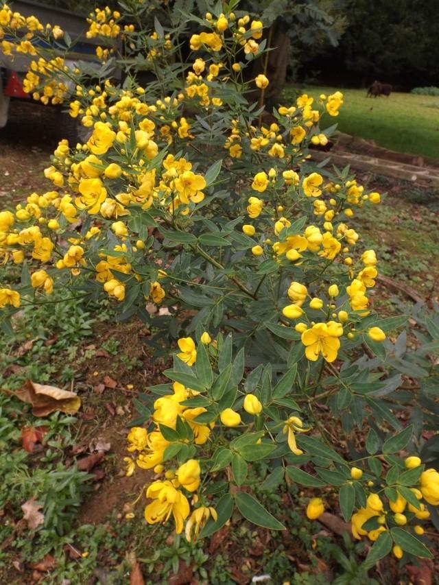 floraisons d'octobre - Page 13 02816