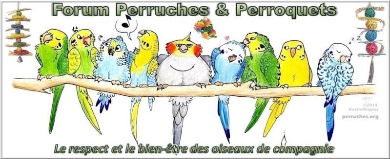 Perruches & Perroquets