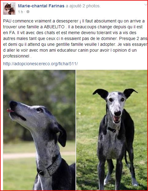 Abuelito 9 ans  – ADOPTE !!! - Page 4 Forum10