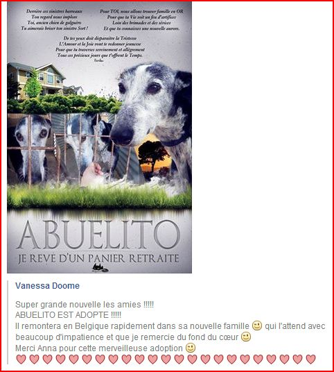 Abuelito 9 ans  – ADOPTE !!! - Page 5 Forum_11