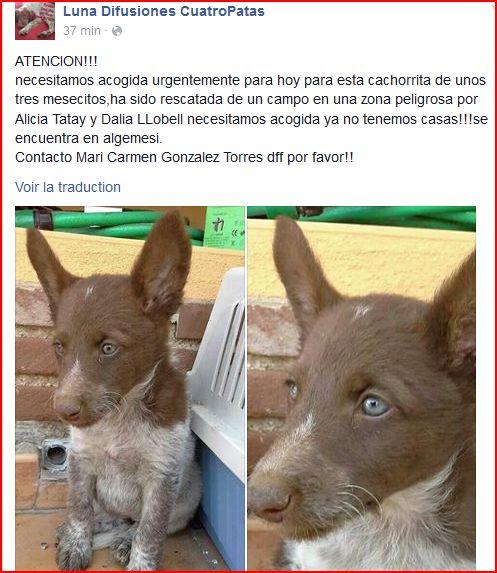 BB dans la rue en Espagne cherche une famille Luna_d10