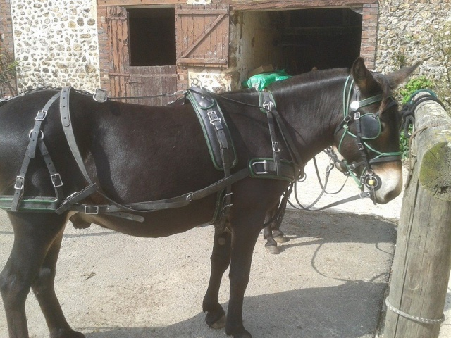 Mon projet d'attelage à 4 mules pas à pas ... 10473011