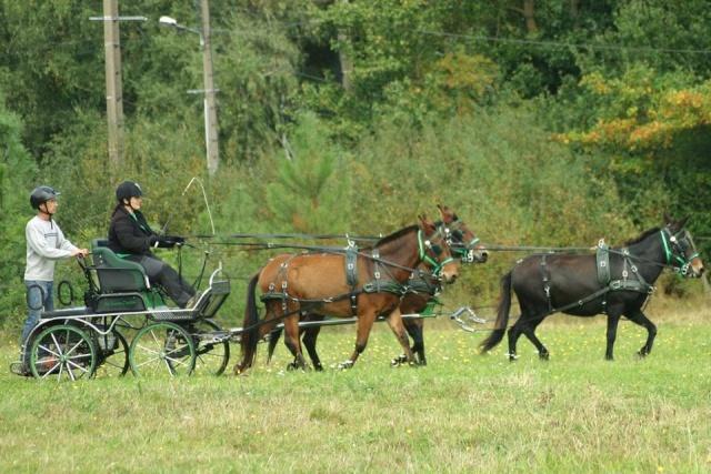 Mon projet d'attelage à 4 mules pas à pas ... 10636010