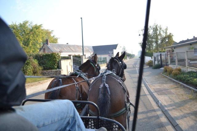 Mon projet d'attelage à 4 mules pas à pas ... Dsc_2812