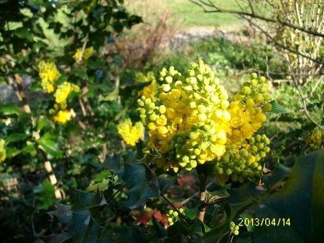 33 - Un nouveau thème.........alors jaune !!! - Page 4 Avril_10