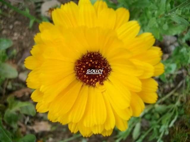 33 - Un nouveau thème.........alors jaune !!! - Page 4 Juin_022