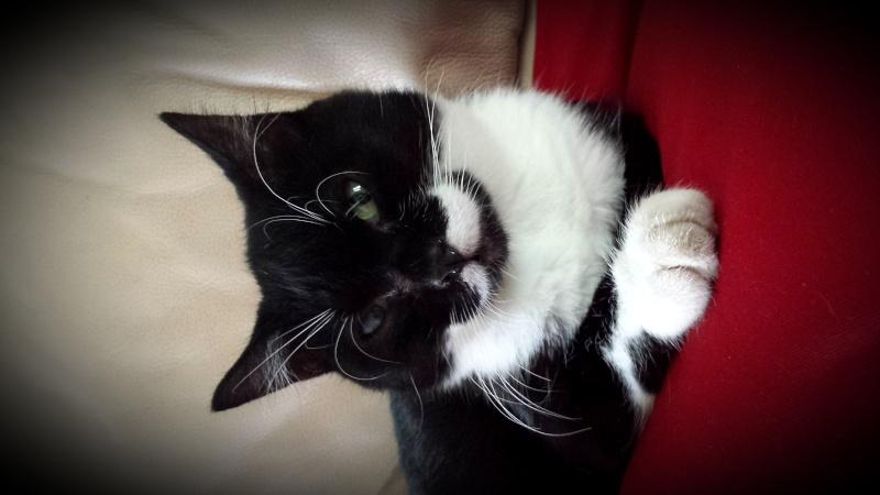 Jipsy, femelle, 2012, noire et blanche 20140710