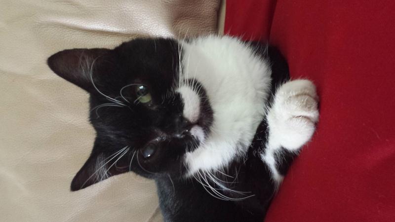 Jipsy, femelle, 2012, noire et blanche 20140712