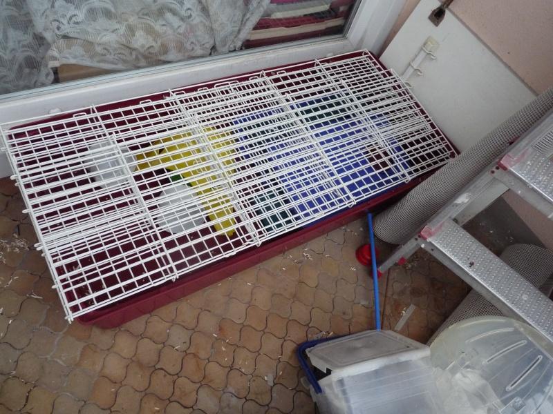 Vend grande cage super pet [91/idf] P1130110