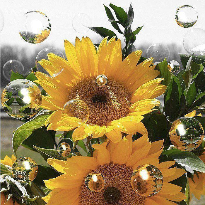 Bon anniversaire NAVANE ! Fleur_10