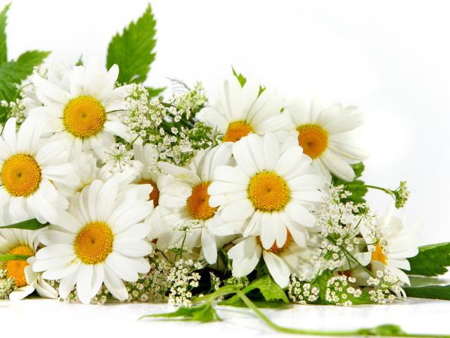 Joyeux Anniversaire Mael21 !!! Flower11
