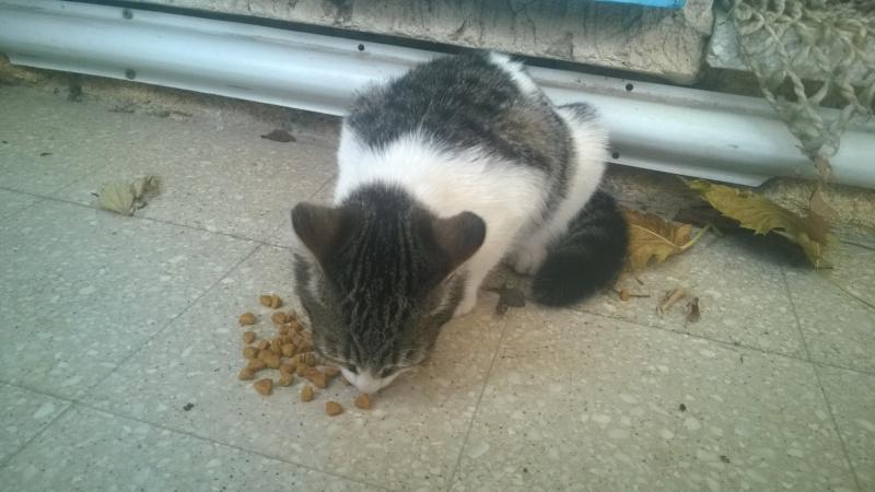 CACAHUETE, chaton mâle né env août 2014 - adopté par Zab's (10) Wp_20123
