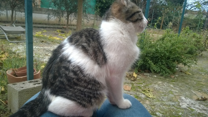 CACAHUETE, chaton mâle né env août 2014 - adopté par Zab's (10) Wp_20126