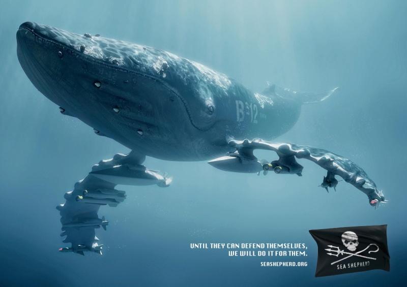 chasse a la baleine Balein10