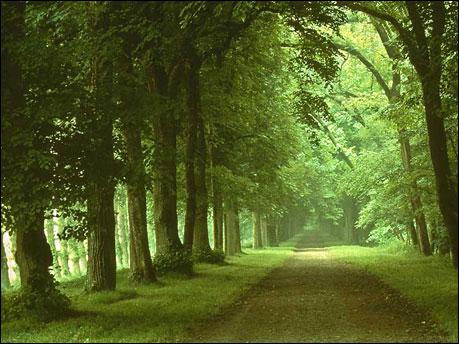 Doğa Resimleri-1 610