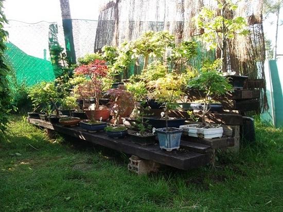 Quelques bonsaï et pré-bonsaï Dscf4023