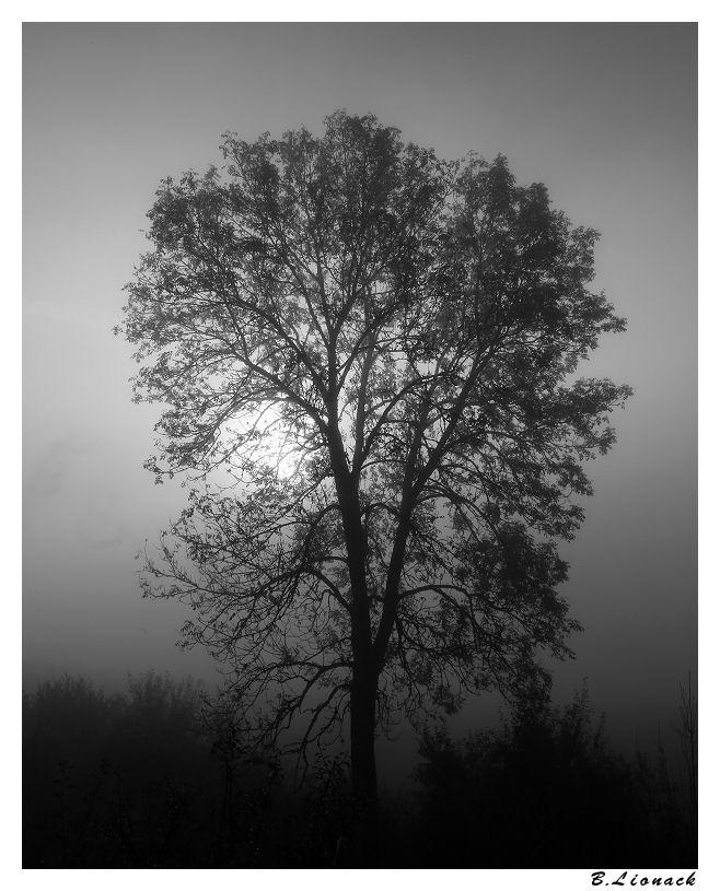 Arbre dans la brume Arbre10