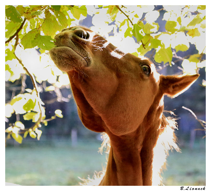 Jument facétieuse Horse010