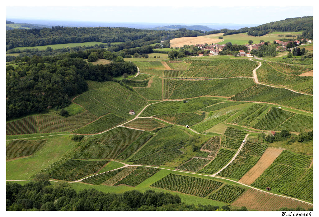 Vignoble de Château Chalon Vign0110