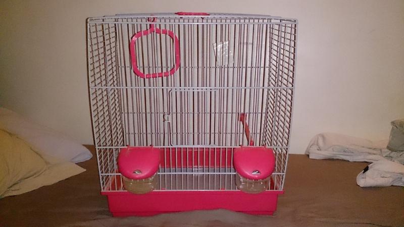 Bagares, battements d'ailes, couple, chant et nouvelle cage Dsc_0010