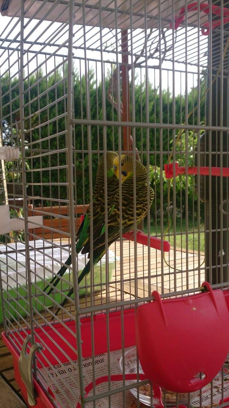 Bagares, battements d'ailes, couple, chant et nouvelle cage Dsc_0011