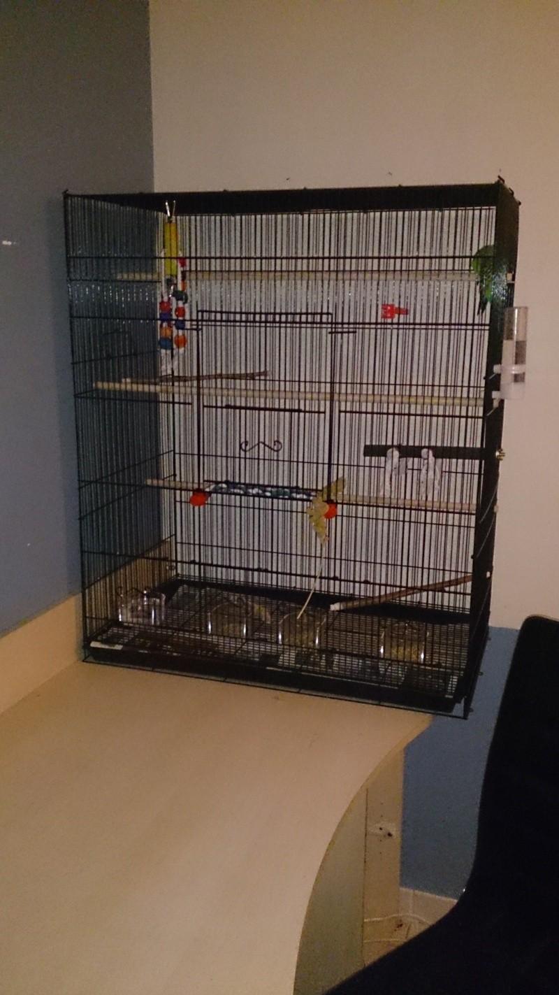 Bagares, battements d'ailes, couple, chant et nouvelle cage Dsc_0012