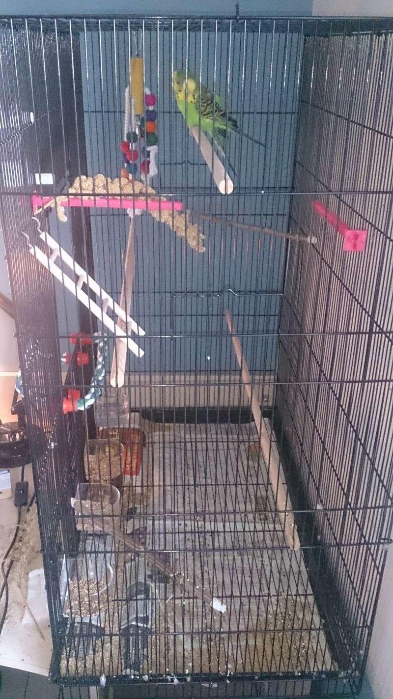 Bagares, battements d'ailes, couple, chant et nouvelle cage Dsc_0110