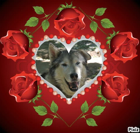 LUCKY Husky 16 ans et demi ASSO65  DECEDE - Page 3 Homage10